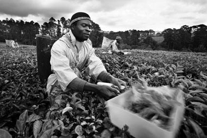 Malawi di Beniamino Pisati
